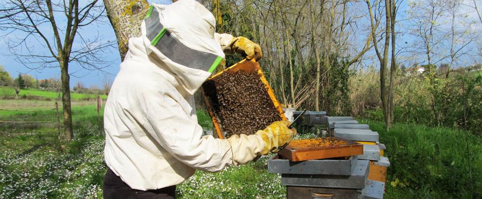 Il fratello apicoltore: