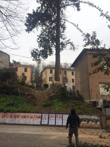 Gli alberi abbattuti in via Giro dei Debitori