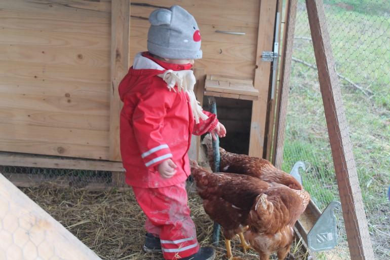 """Uno dei bambini di """"Maestra Natura"""" mentre fa visita alle galline del pollaio"""