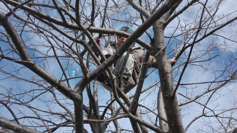"""Un bambino di """"Maestra Natura"""" in cima a un albero"""
